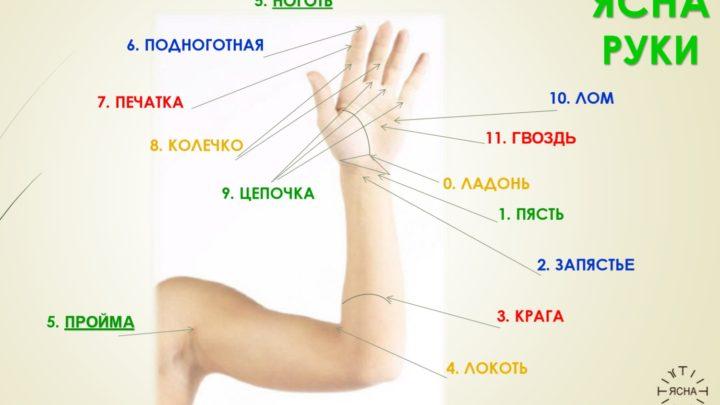 Ясна руки
